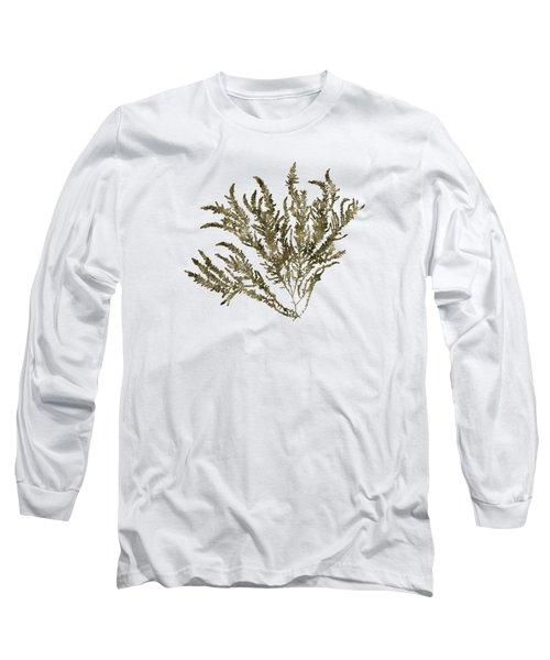 Ocean Seaweed Plant Art Ptilota Sericea Square Long Sleeve T-Shirt