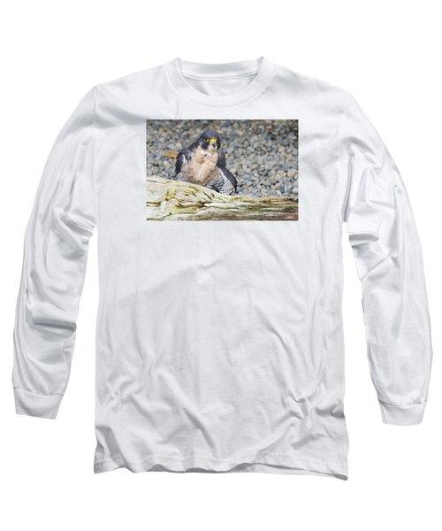 Peregrine Falcon 2 Long Sleeve T-Shirt by Harold Piskiel
