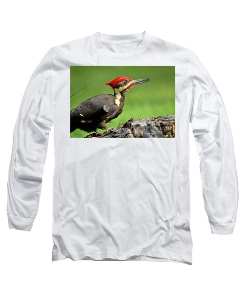 Pileated 2 Long Sleeve T-Shirt by Douglas Stucky