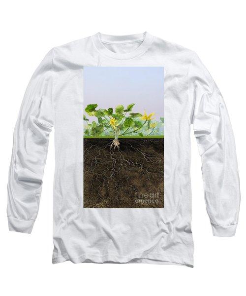 Pilewort Or Lesser Celandine Ranunculus Ficaria - Root System -  Long Sleeve T-Shirt