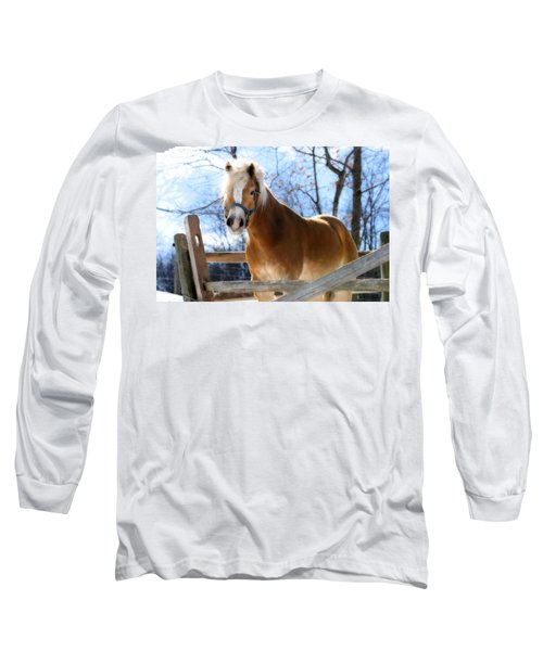 Portrait Of A Haflinger - Niko In Winter Long Sleeve T-Shirt by Angela Rath