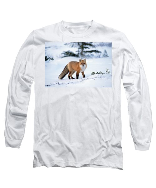Red Fox Vulpes Vulpes Portrait Long Sleeve T-Shirt