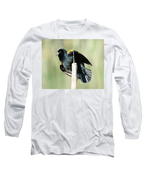 Long Sleeve T-Shirt featuring the photograph Red-winged Blackbird by Jack Moskovita