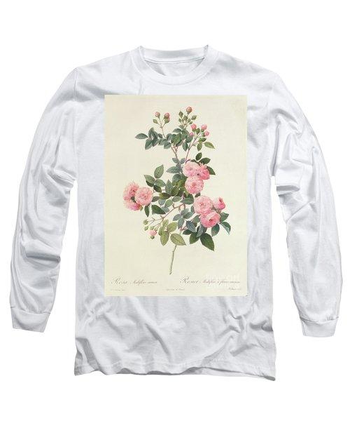 Rosa Multiflora Carnea Long Sleeve T-Shirt