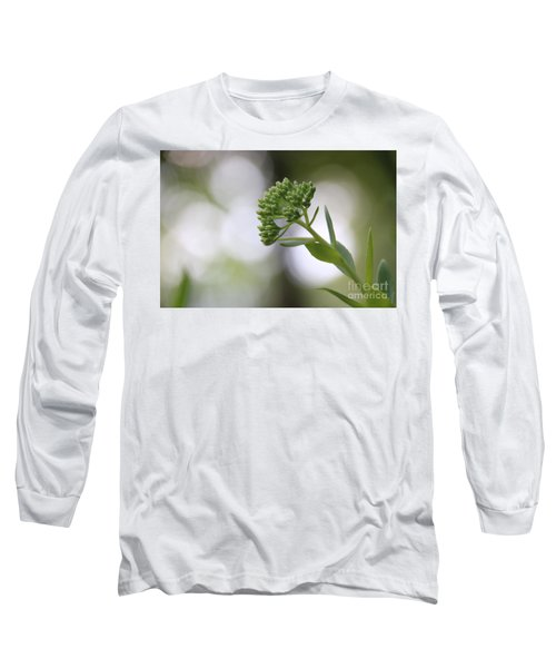 Sedum Buds At Late Evening Long Sleeve T-Shirt by Marilyn Carlyle Greiner
