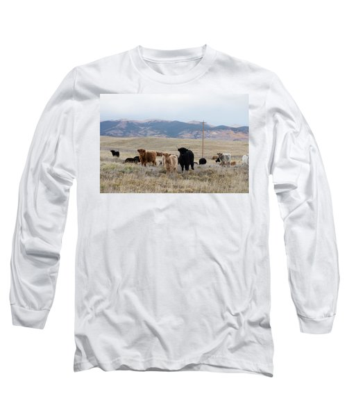 Shaggy-coated Cattle Near Jefferson Long Sleeve T-Shirt