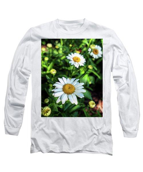 Shasta Daisy Long Sleeve T-Shirt by Robert FERD Frank