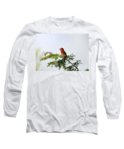 Summer Tanager In Mesquite Scrub Long Sleeve T-Shirt by Robert Frederick