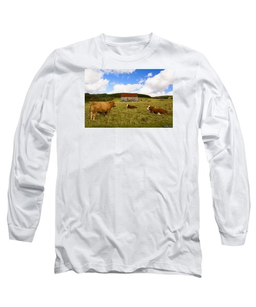 The Cows Of Mabou Long Sleeve T-Shirt by Ken Morris