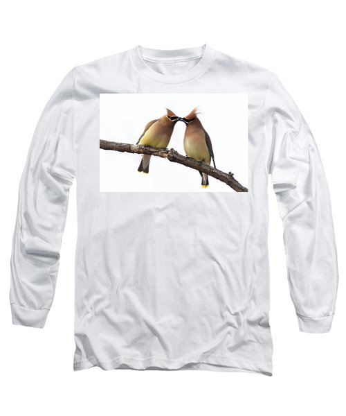 Waxwings In Love Long Sleeve T-Shirt by Mircea Costina Photography