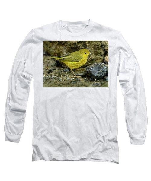 Yellow Warbler Long Sleeve T-Shirt by Doug Herr