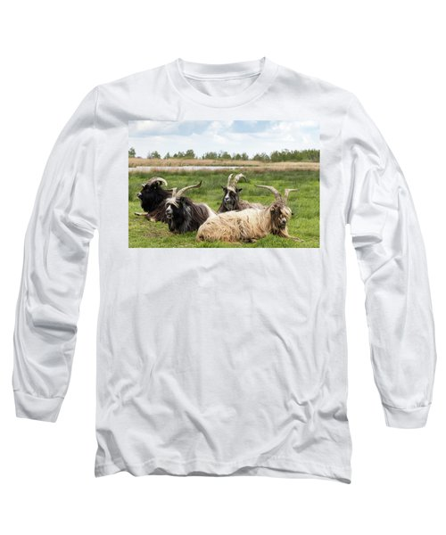 Long Sleeve T-Shirt featuring the photograph Goats  by Anjo Ten Kate