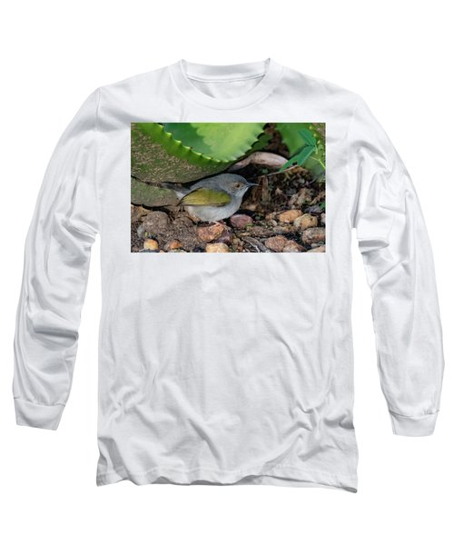 Gray-backed Camaroptera Long Sleeve T-Shirt
