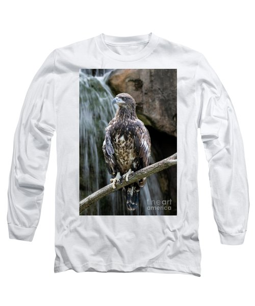 Juvenile Bald Eagle Long Sleeve T-Shirt