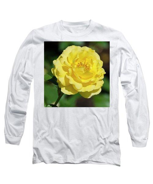 Striking In Yellow Long Sleeve T-Shirt