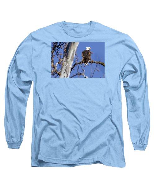 Bald Eagle 2 Long Sleeve T-Shirt by David Lester