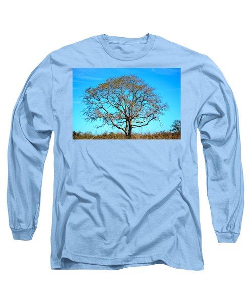Long Sleeve T-Shirt featuring the photograph Beautiful Branching by Debra Martz