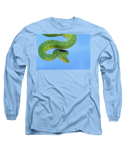 Emerald Tree Boa Corallus Caninus Long Sleeve T-Shirt by Thomas Kitchin & Victoria Hurst