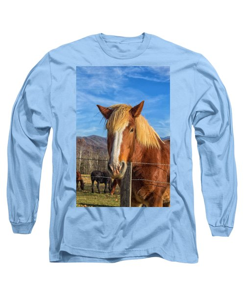Wild Horse At Cades Cove In The Great Smoky Mountains National Park Long Sleeve T-Shirt