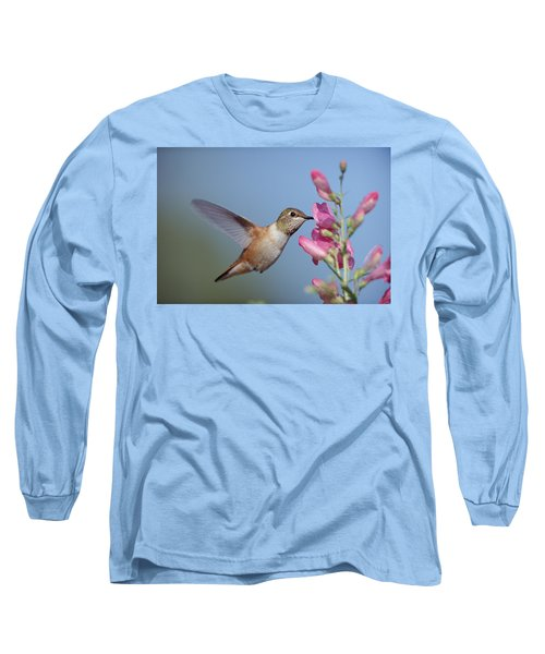 Rufous Hummingbird Juvenile Feeding Long Sleeve T-Shirt