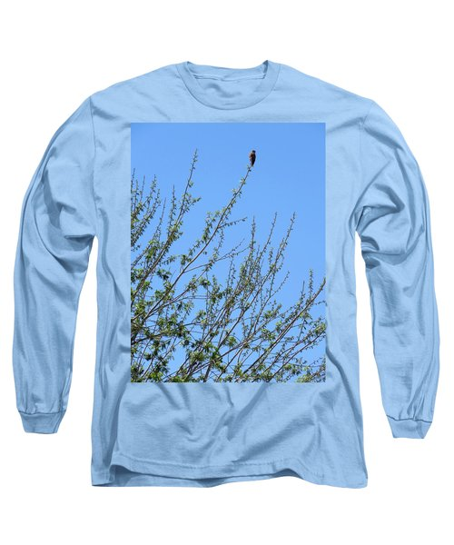 American Kestrel Atop Pecan Tree Long Sleeve T-Shirt