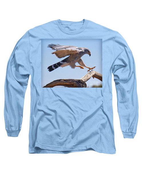 Long Sleeve T-Shirt featuring the photograph Grey Hawk Alights by Martin Konopacki