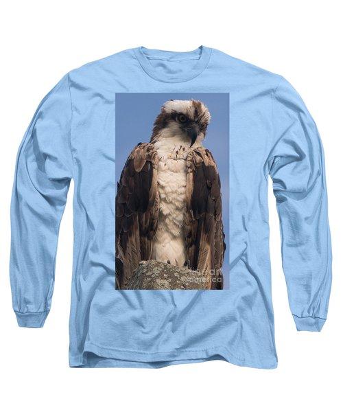 Hawk Glare Long Sleeve T-Shirt