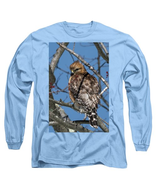 Long Sleeve T-Shirt featuring the photograph Red Shouldered Hawk 2017 by Bill Wakeley