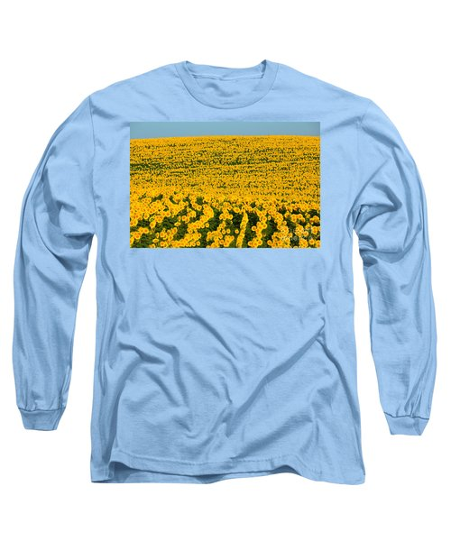 Sunflowers Galore Long Sleeve T-Shirt by Catherine Sherman