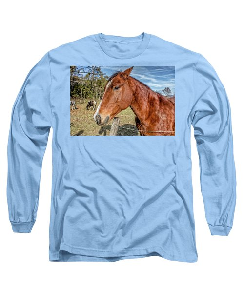 Wild Horse In Smoky Mountain National Park Long Sleeve T-Shirt by Peter Ciro