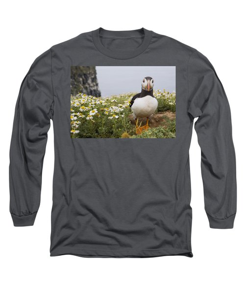 Atlantic Puffin In Breeding Plumage Long Sleeve T-Shirt by Sebastian Kennerknecht