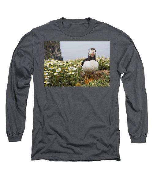 Atlantic Puffin In Breeding Plumage Long Sleeve T-Shirt