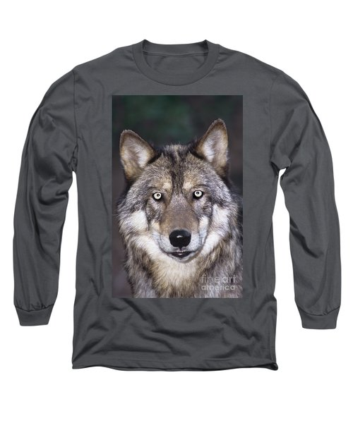 Gray Wolf Portrait Endangered Species Wildlife Rescue Long Sleeve T-Shirt by Dave Welling