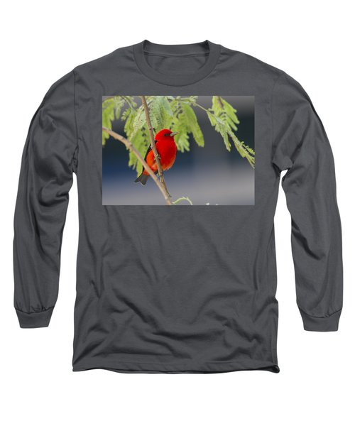 Pretty Boy  Long Sleeve T-Shirt by Doug Lloyd