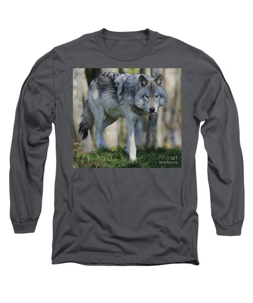 Alpha... Long Sleeve T-Shirt