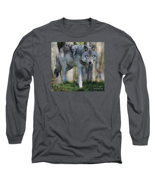 Alpha... Long Sleeve T-Shirt