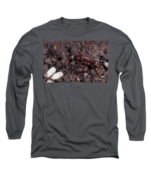 Ant Queen Fight Long Sleeve T-Shirt by Gregory G. Dimijian, M.D.