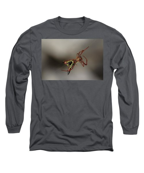 Arrow-shaped Micrathena Spider Starting A Web Long Sleeve T-Shirt by Daniel Reed