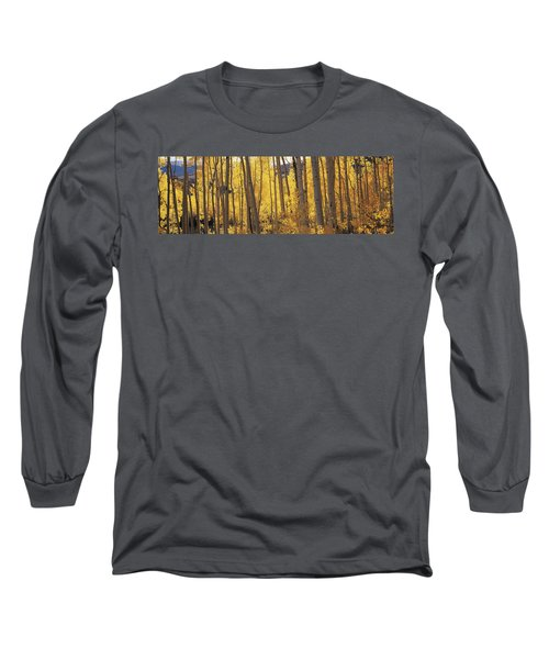 Aspen Trees In Autumn, Colorado, Usa Long Sleeve T-Shirt