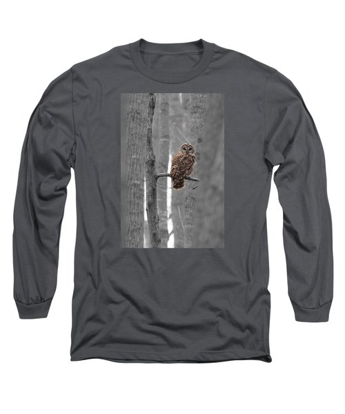 Barred Owl In Winter Woods #1 Long Sleeve T-Shirt by Paul Rebmann