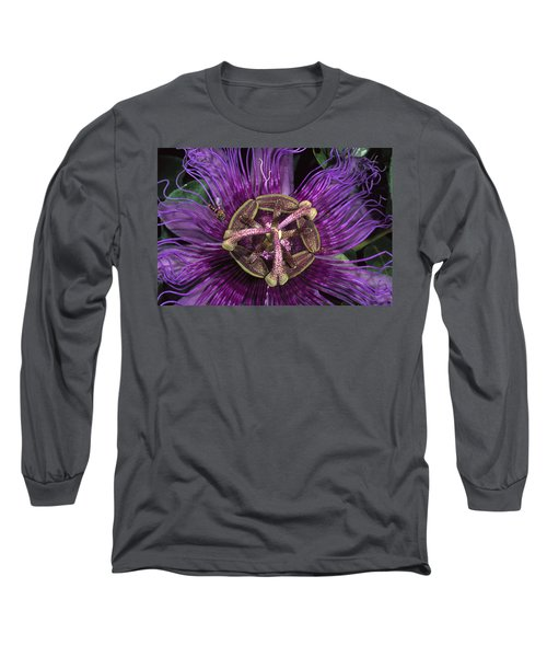 Bee On Passion Flower Brazil Long Sleeve T-Shirt