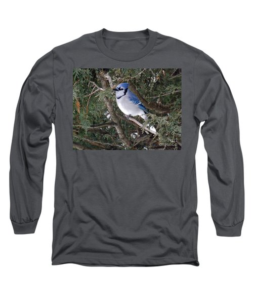 Long Sleeve T-Shirt featuring the photograph Blue Jay In The Cedars by Brenda Brown