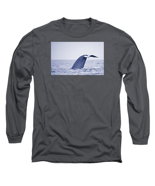Blue Whale Tail Fluke With Remoras Long Sleeve T-Shirt by Liz Leyden