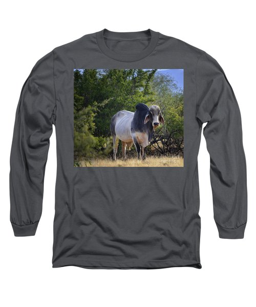 Brahma Cow Long Sleeve T-Shirt