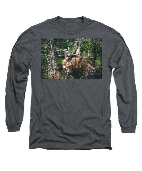 Bull Moose In Spring Long Sleeve T-Shirt by David Porteus