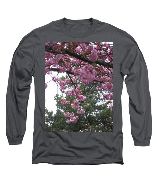 Cherry Blossoms 1 Long Sleeve T-Shirt by David Trotter