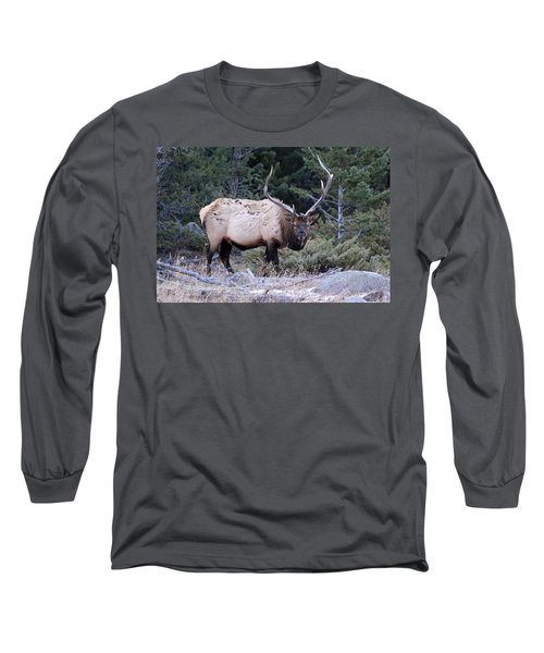 Colorado Bull Elk Long Sleeve T-Shirt