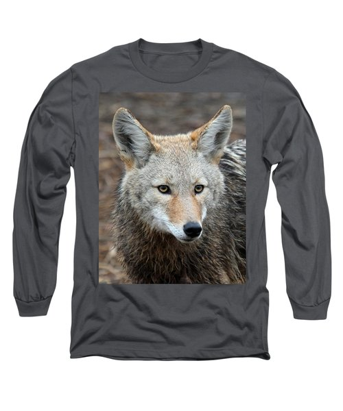 Coyote Long Sleeve T-Shirt by Athena Mckinzie