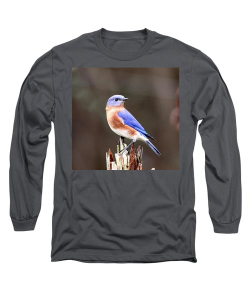 Eastern Bluebird - The Old Fence Post Long Sleeve T-Shirt