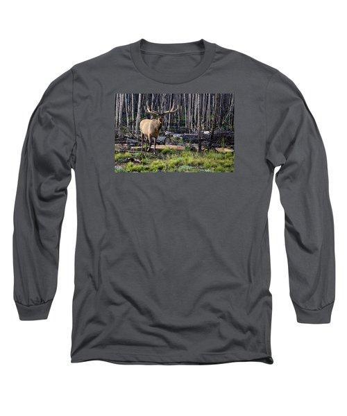 Elk In The Woods Long Sleeve T-Shirt